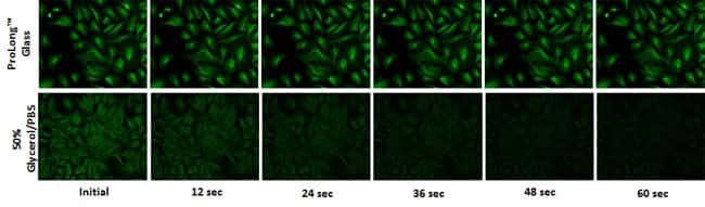 FITC photobleach effect on image intensity over time with a widefield microscope